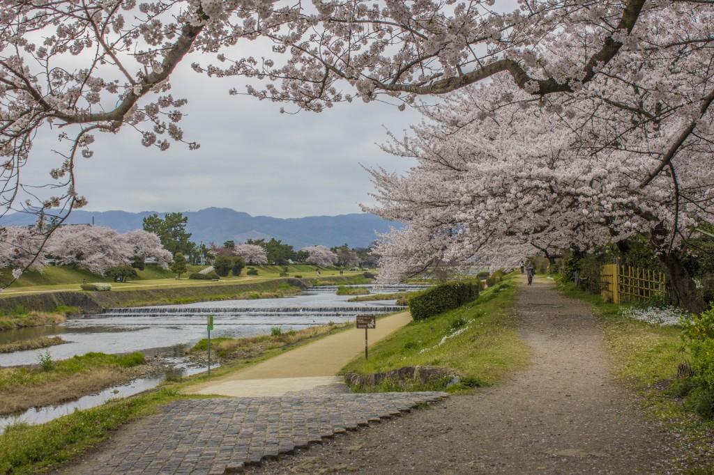 Rivière Kamogawa 5184x3456