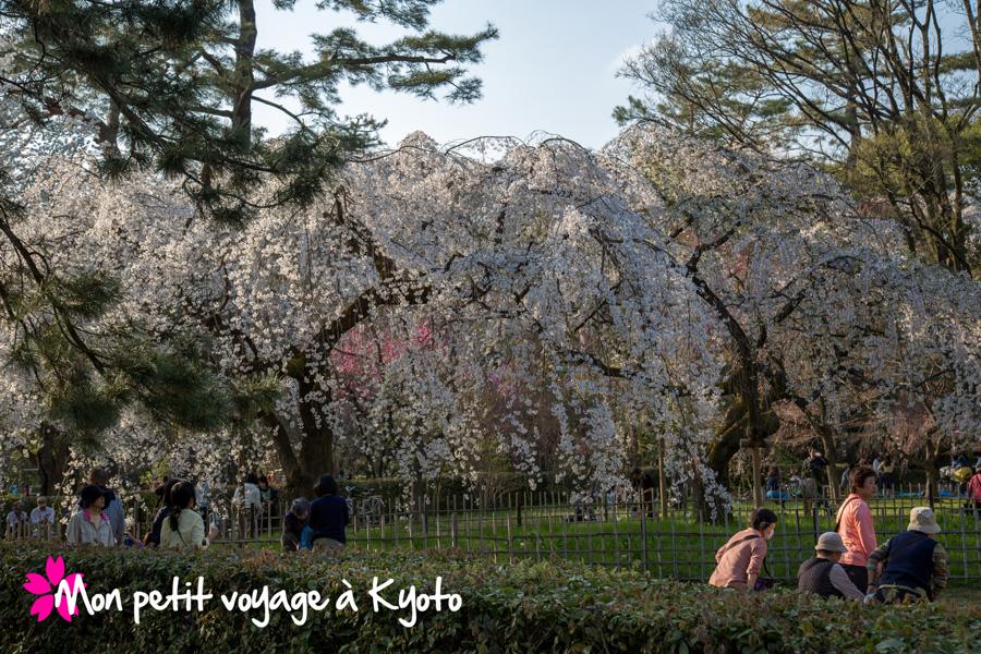 Parc du palais impérial Sakura
