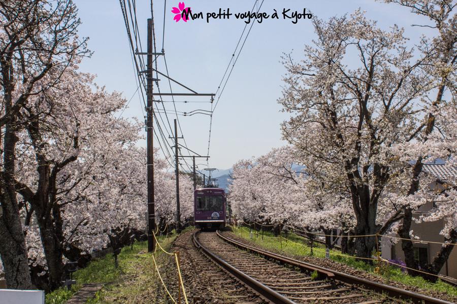 Tunnel de cerisier