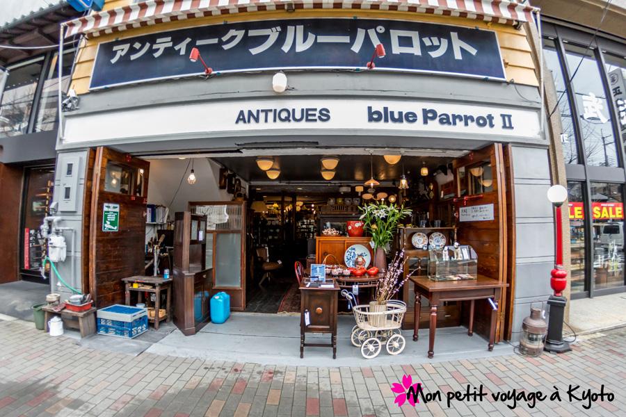 Blue Parrot2