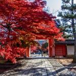 Temple Shinnyo-dô